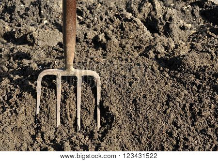 Gardener preparing vegetable plot soil by digging with a garden fork.