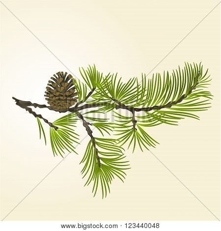 Branch Pine and pine cone natural background vector illustration