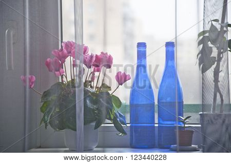 View through very thing grey curtain on window sill with pink flower of cyclamen two glass blue bottles with no people indoor interior