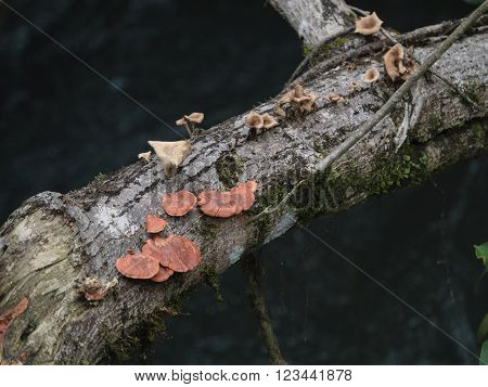 Fungi growth on dead tree seen in northern Argentina