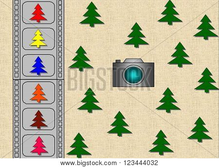 Green fir-trees - color fir-trees. 