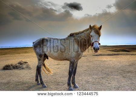 portrait full body of white horse with beautiful rim light