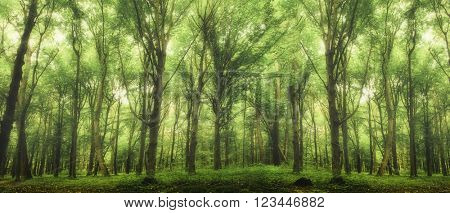 spring forest trees. nature green wood sunlight backgrounds. fog