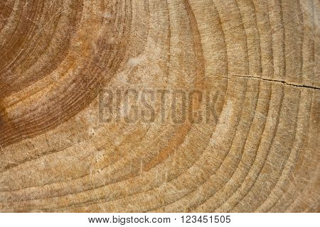 Wood stump texture, cutted tree trunk, close-up, old tree stump macro top view, crack wood ancient growth rings, wooden  timber natural background