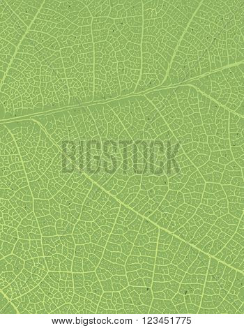 Nature background with free space for text or image. Green leaf veins texture on the toned recycled paper texture.