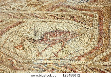 Ancient mosaic floor in Mamshit National park Negev desert in Israel.