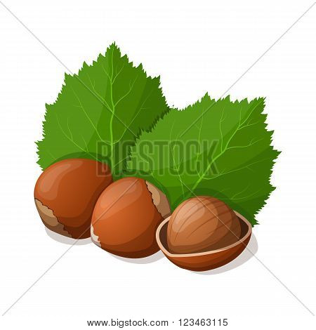 Hazelnuts with leafs isolated on white. Vector illustration.