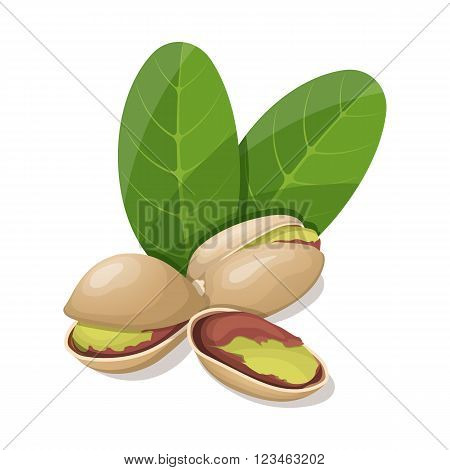 Pistachios with leafs isolated on white. Vector illustration.