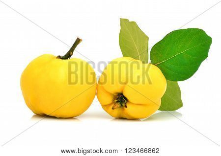 Ripe yellow quinces isolated on the white