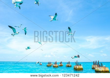 Gulls circling over the sea in search of food on a background of sea and blue sky. Sea birds in flight in search of food
