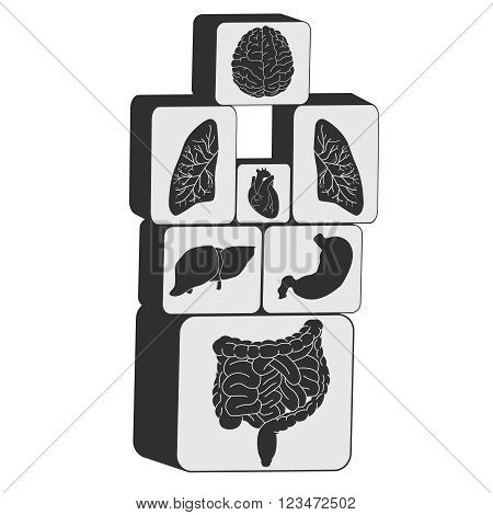 Vector internal organs icon set cubes combination illustration