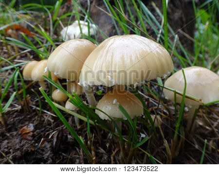 Mushroom In The Grass In Autumn Day