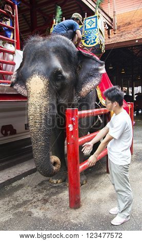 THAILAND, PATTAYA, MARCH, 28, 2015 - An Thai elephant is prepared to the walk with tourists in Nong Nooch tropical garden in Pattaya, Thailand.