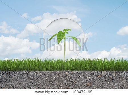 A green sprout in a light bulb grows from the grass on the ground with small stones. Green Energy Concept.