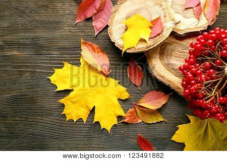 Autumn composition: bunch of viburnum and colourful leaves on wooden table