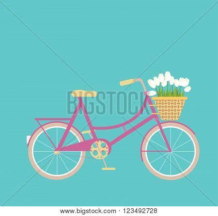 Pink bicycle with wicker basket of white tulip flowers on a turquoise background