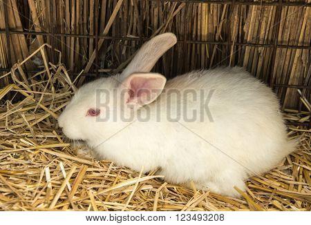 rabbit on dry grass (straw)
