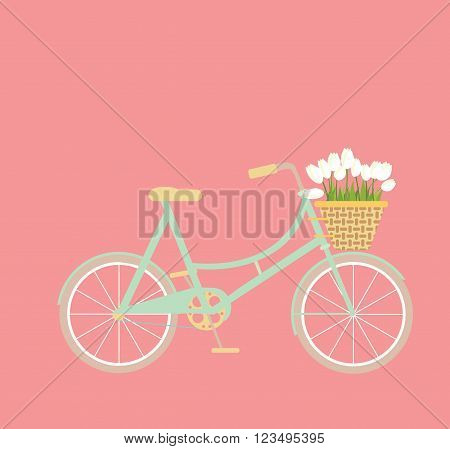 Mint green bicycle with wicker basket of white tulip flowers on a pink background