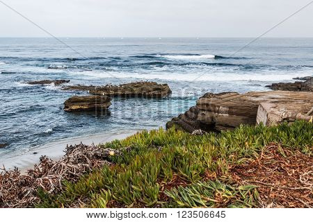 Rock formations in the ocean and iceplant in the foreground at La Jolla, California.