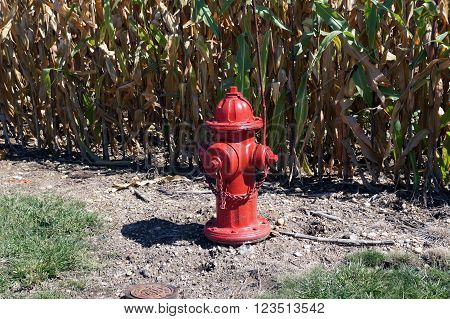 A red fire hydrant stands before a cornfield in Plainfield, Illinois during September.