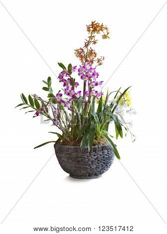 Different types and colors orchids in pot on white background.