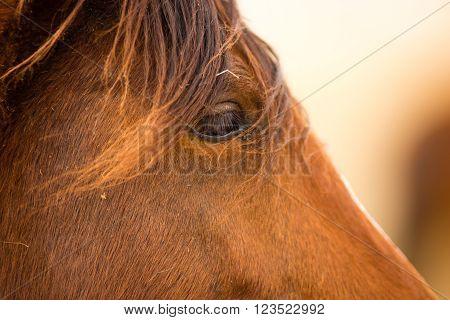 Wild Horse Face Portrait Oregon Equestrian Animal