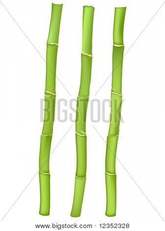 vector illustration of three bamboo stems