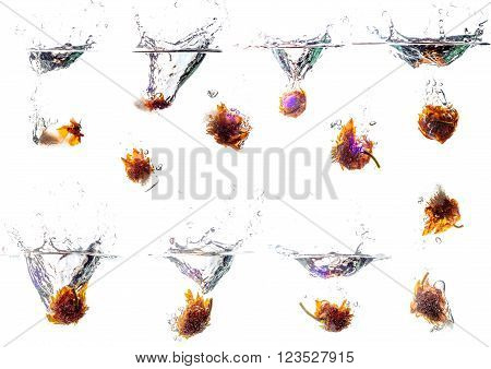 Samples of water splash with ice cubes. Ice cube have frozed flower on it. Natural splash.