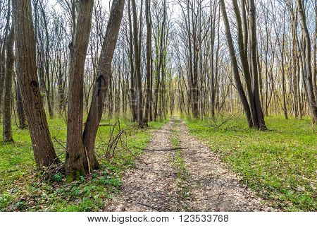 Hiking Trail In The Forest