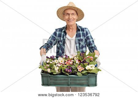 Senior gardener holding a plastic crate full of flowerpots and flowers isolated on white background