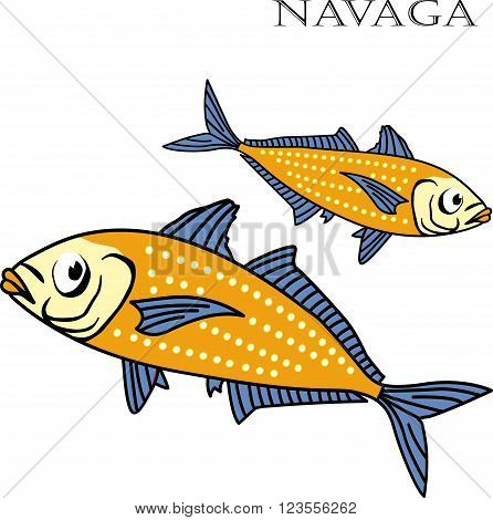 Nagava fish color cartoon vector illustration. Nagava fishes on white background. Nagava fish vector. Nagava fish illustration. Nagava fish isolated vector.