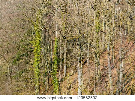 distant view of a slope with forest at early spring time in Southern Germany