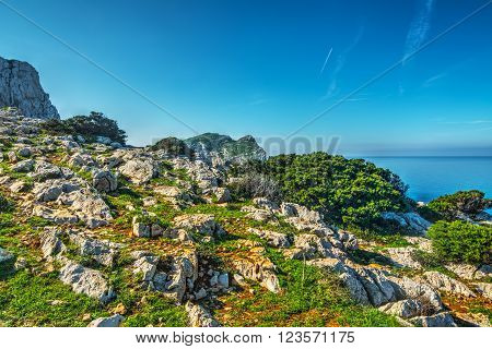 white rocks and green plants in Capo Caccia Sardinia