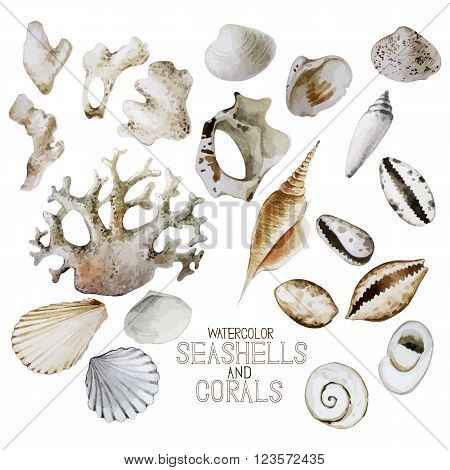 Collection of  small watercolor seashells and corals. Vector sea and ocean design elements isolated on white background