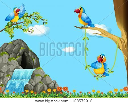 Three parrots living by the cave illustration