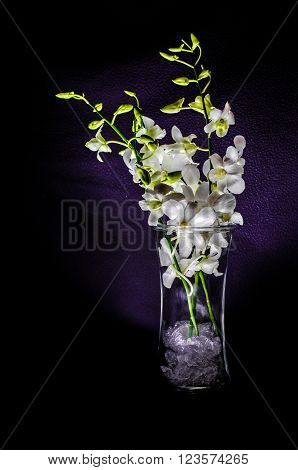 Small white orchid in a glass vase