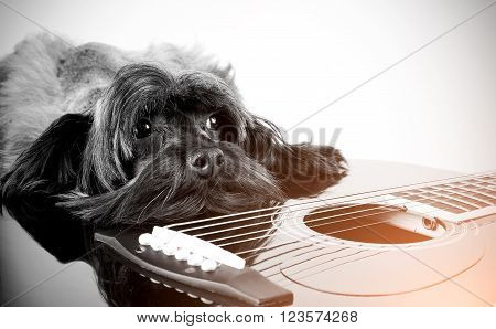 Sad doggie breed the Petersburg orchid with a guitar.