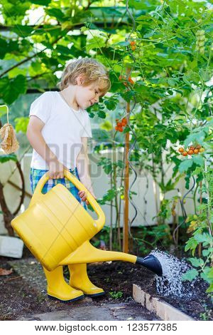 Adorable little kid boy watering plants and vegetables with can in greenhouse and garden. Preschool child helping and having fun on warm summer day. Family, garden, gardening, lifestyle