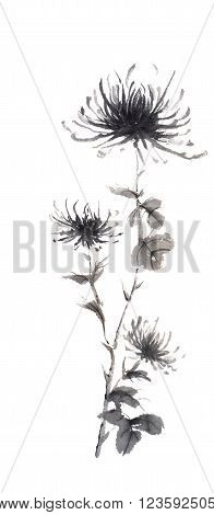 Spider chrysanthemums Japanese style original sumi-e ink painting. Great for greeting cards or texture design.