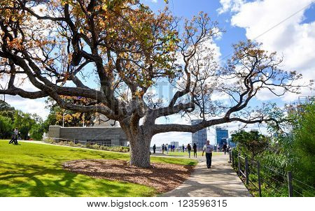 PERTH,WA,AUSTRALIA-AUGUST 22, 2015: Stunning tree with long thick branches and tourists at King's Park botanical gardens in Perth, Western Australia.