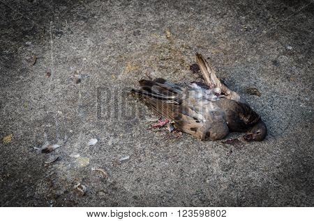 Dead bird lay on the floor, lifeless