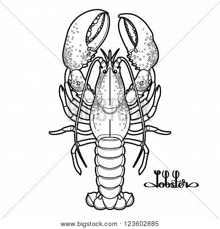 Graphic vector lobster drawn in line art style. Sea and ocean creature isolated on white background. Top view. Seafood element. Coloring book page design