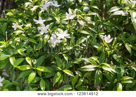 Group of white flower in garden stock photo