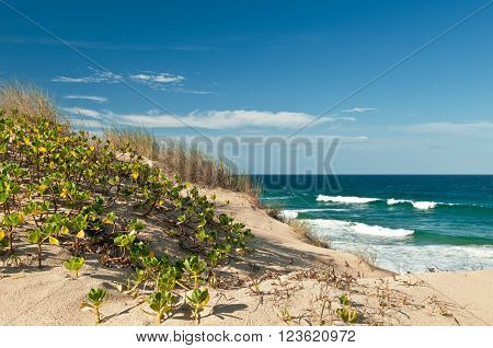 View on dunes of white sand with green grass, blue sky with clouds and ocean with waves. Indian Ocean tropical beach with waves, Tofo, Mozambique