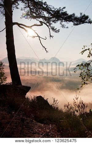View through branches to deep misty valley within daybreak. Foggy and misty morning on the sandstone view point in national park Germany.