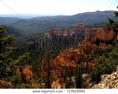 Pine woodlands in Bryce Canyon National Park (Utah, USA)
