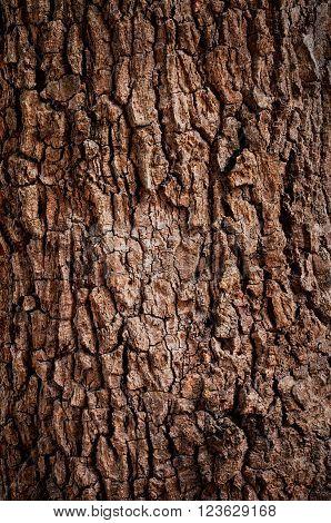 Wooden texture background. Tree Texture. Tree Background. Crack Tree