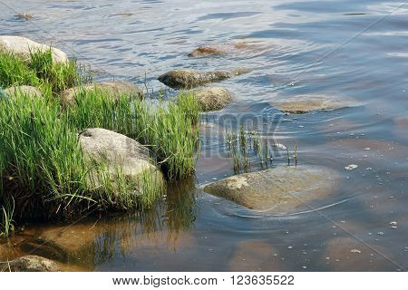 green grass (vegetation) and grey stones on the river bank of Volga at june