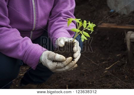 Hands of  a man planting his own vegetable, garden
