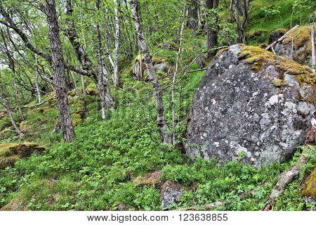 Trolltunga Trail In Norway